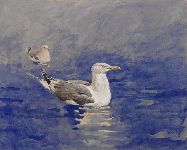 Jamie Wyeth, Gull Study #3, 1976, watercolor on paper board, 16 x 20 inches