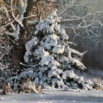 Michael Godfrey, Winter's Finery, Oil on board, 16 x 20 inches
