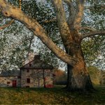 Timothy Barr, Gilpin Sycamore, 2012, oil on panel, 16 x 24 inches