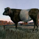 Timothy Barr, Dun Belted Galloway, oil on panel, 12 x 16 inches