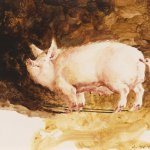Jamie Wyeth, Pig, circa 1969-1970, Watercolor on paper, 11 x 14 inches
