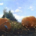 Timothy Barr, Indian Summer Breeze, Oil on Panel, 16 x 24 inches