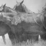 Woodrow Blagg, Open Remola, Graphite on Paper, 20 x 40 inches