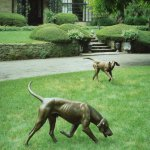 J. Clayton Bright, Couple of Foxhounds, bronze, life size