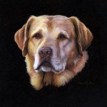 Timothy Barr, Yellow Lab, 2014, oil on panel, 9 x 9 inches