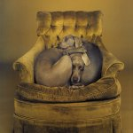 William Wegman, Nest, 1989/2008, pigment print, 24 x 19 5/8 inches
