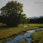 Peter Sculthorpe, Evening Pasture, 2014, oil, 14 x 18 inches