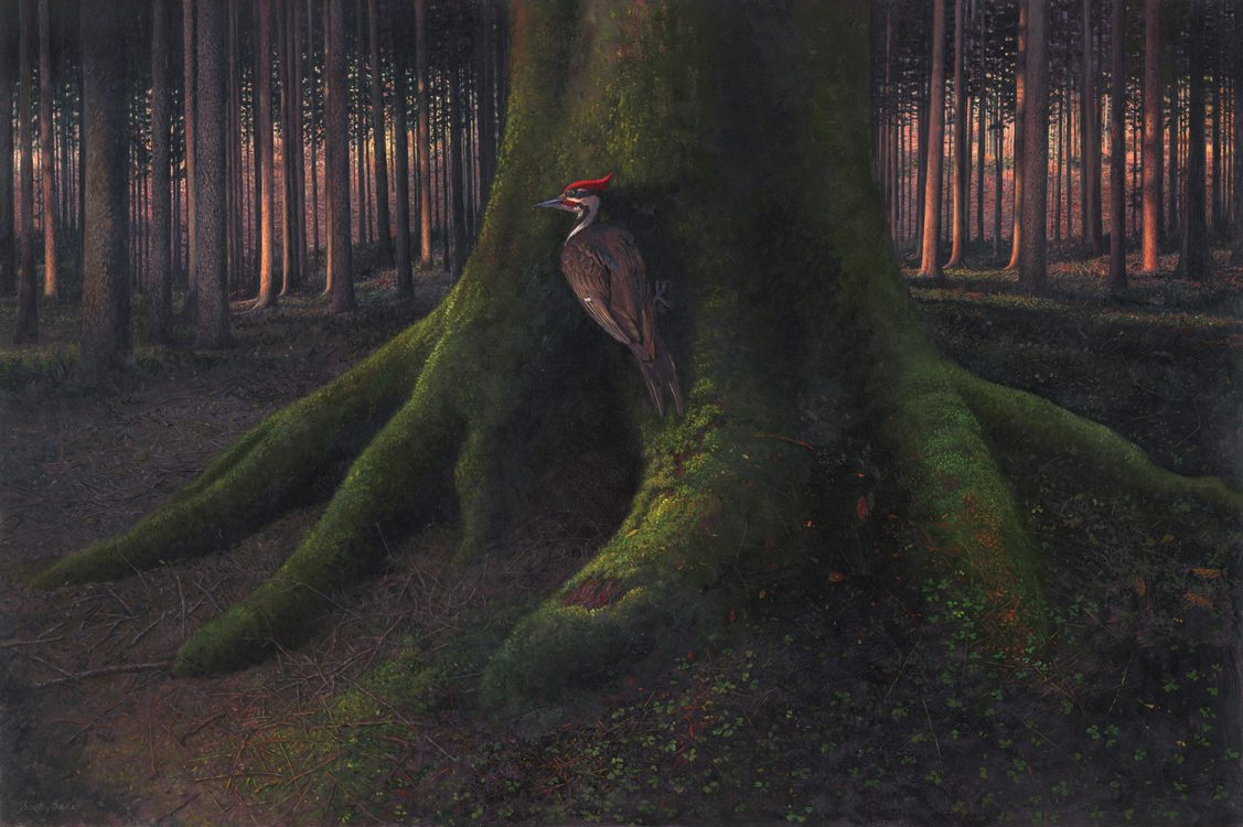 Timothy Barr, Pileated, Oil on panel, 20 x 30 inches