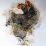 Sarah McRae Morton, Barred Plymouth Rock, 2020, Oil on linen, 54 ¼ x 52 inches